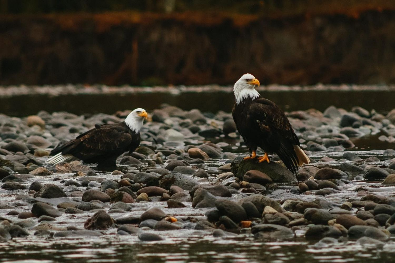 Squamish Eagles